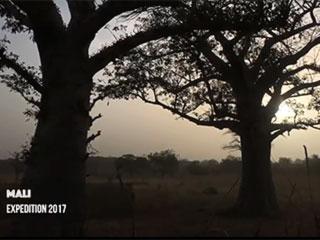 Этнографическая экспедиция  в Мали в ноябре 2017 года